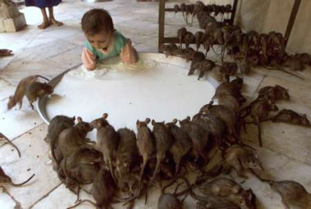 ratas secretos de la vida