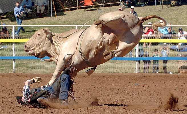 Big ass bull