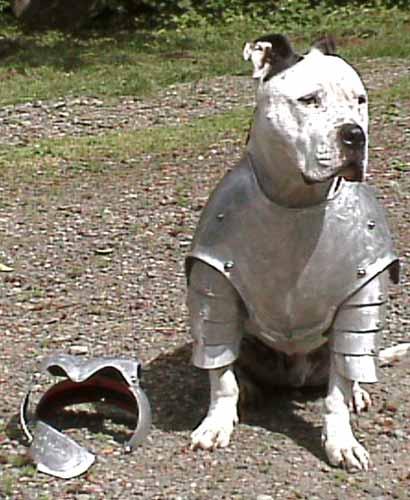 Hundeanzug