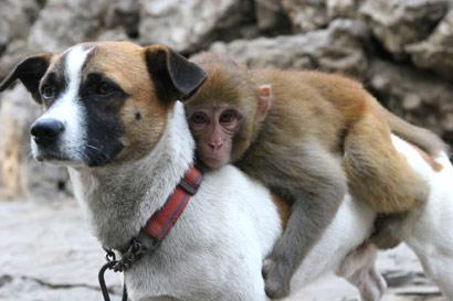 o City Zoo in China were worri