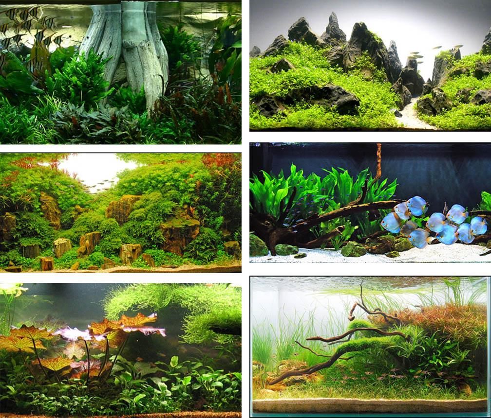 1000+ Images About Beautiful Aquariums/aquascapes On Pinterest