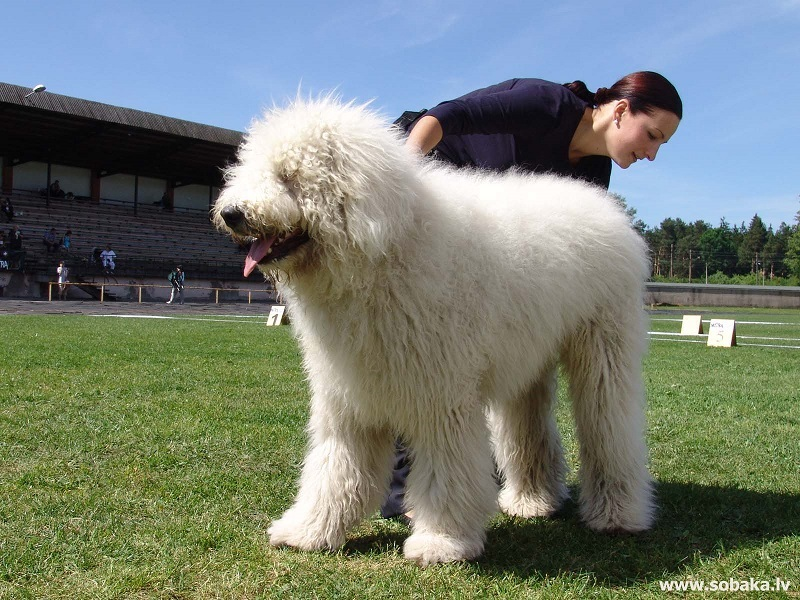 Large Dog Breeds Long Hair The cellar image of the day