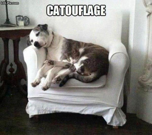Name:  catouflage.jpg Views: 656 Size:  45.6 KB
