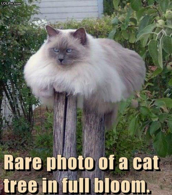 Name:  catree.jpg Views: 683 Size:  77.6 KB