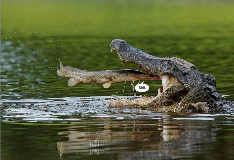 Name:  alligatorvsgar.jpg Views: 578 Size:  113.5 KB