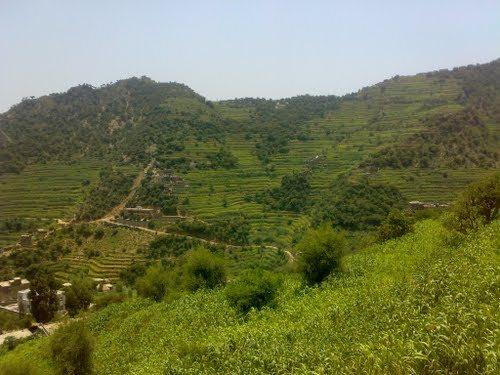 Name:  yemen3.jpg Views: 175 Size:  46.6 KB