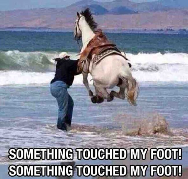 Name:  Touched_My_Foot.jpg Views: 231 Size:  67.0 KB