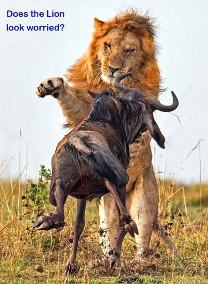 Name:  Lion.jpg Views: 92 Size:  54.7 KB