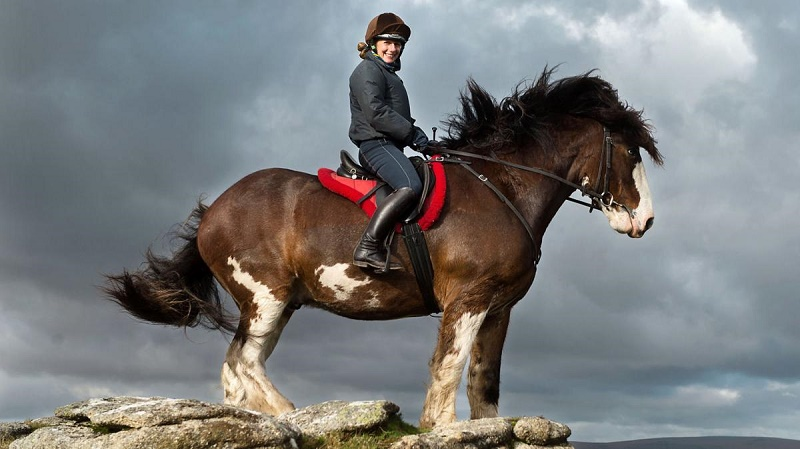 Name:  Clydesdale.jpg Views: 153 Size:  109.3 KB