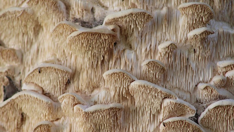 Name:  fungus2.jpg Views: 123 Size:  131.9 KB