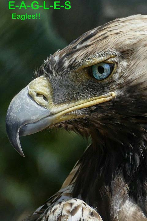 Name:  eagles.jpg