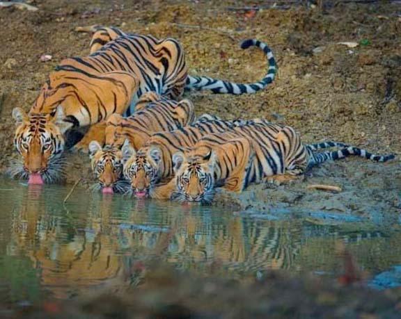Name:  tiger.jpg Views: 105 Size:  54.5 KB