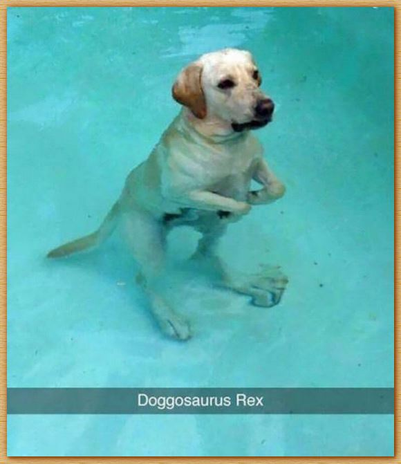 Name:  doggosaurusrex.JPG