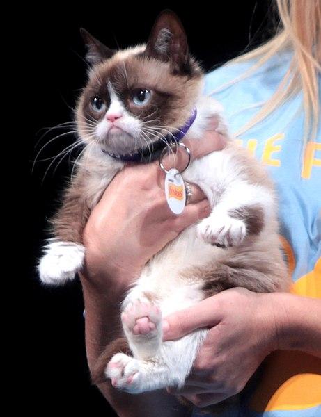 Name:  grumpycat.jpg Views: 89 Size:  47.6 KB