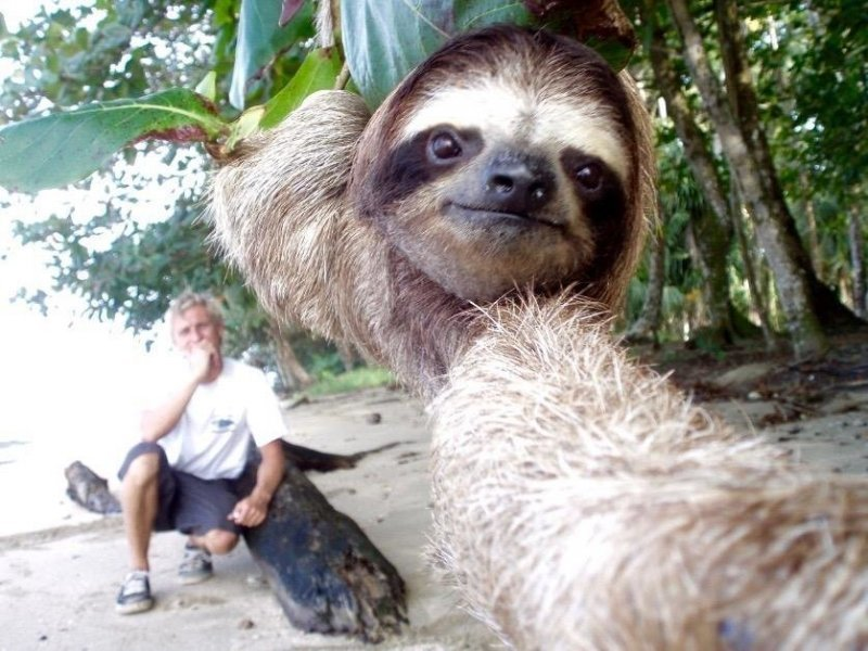 Name:  slothselfie.jpg Views: 72 Size:  104.3 KB