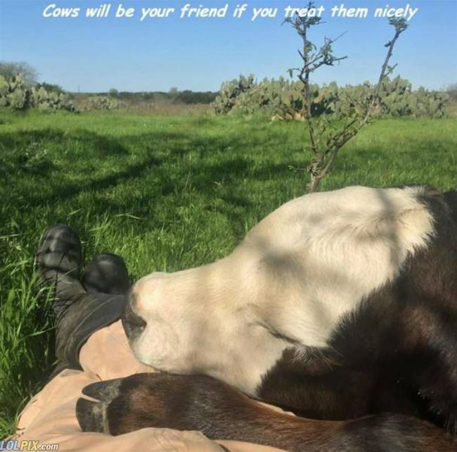 Name:  Cows_Will_Be_Your_Friends.jpg Views: 219 Size:  63.9 KB