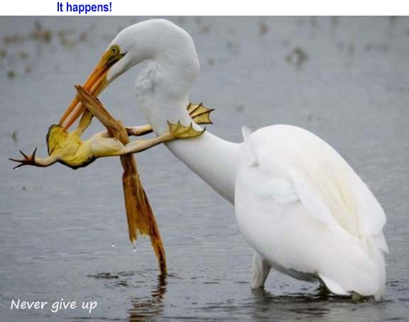 Name:  nevergiveup.jpg