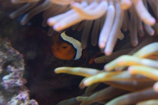 Name:  FaveClownfishPeeking.JPG Views: 104 Size:  93.3 KB