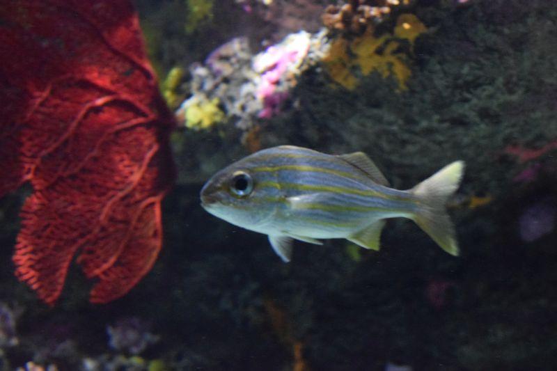 Name:  FaveStripedFish.JPG Views: 104 Size:  109.1 KB