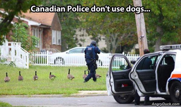 Name:  Canadian_Police.jpg Views: 266 Size:  45.9 KB