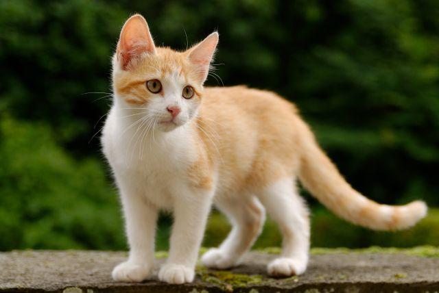 Name:  kitten.jpg Views: 289 Size:  31.9 KB