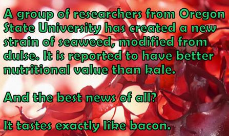 Name:  baconweed.JPG Views: 268 Size:  41.1 KB