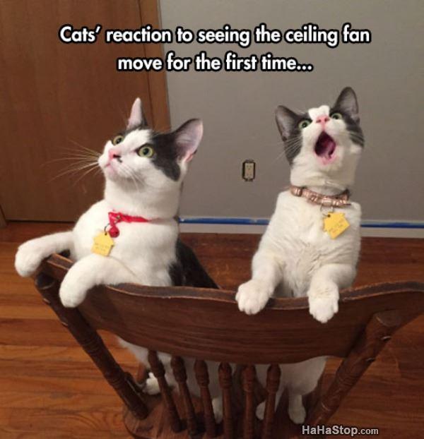 Name:  Cats_Reaction.jpg Views: 256 Size:  42.6 KB