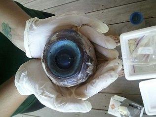 Name:  giant-eyeball.jpg Views: 2439 Size:  20.1 KB