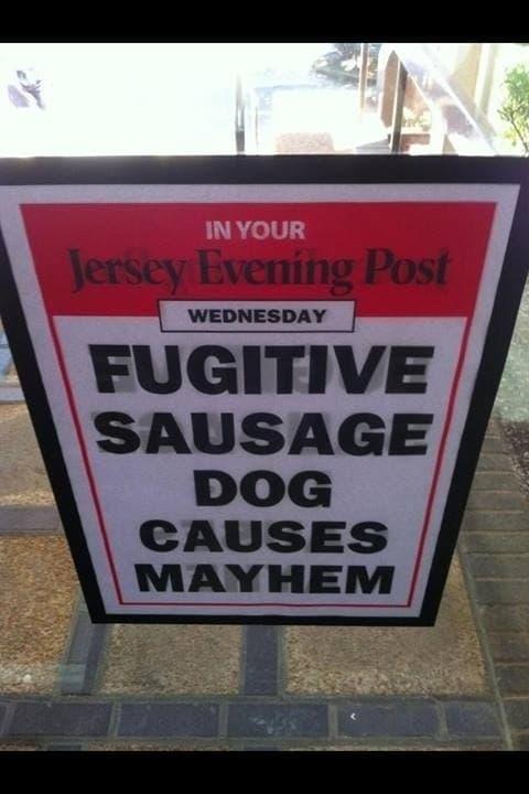 Name:  Sausage Dog Mayhem.jpg Views: 96 Size:  36.8 KB