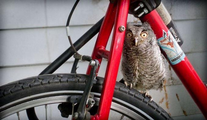Name:  owl.JPG Views: 157 Size:  53.2 KB
