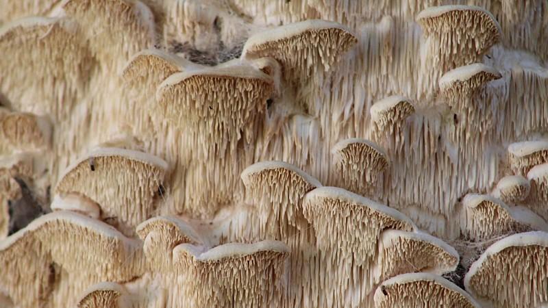 Name:  fungus2.jpg Views: 128 Size:  131.9 KB
