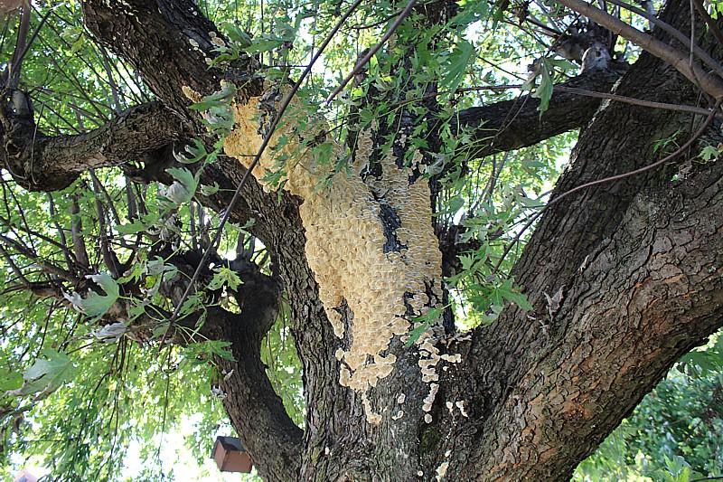 Name:  fungus3.jpg Views: 105 Size:  295.9 KB
