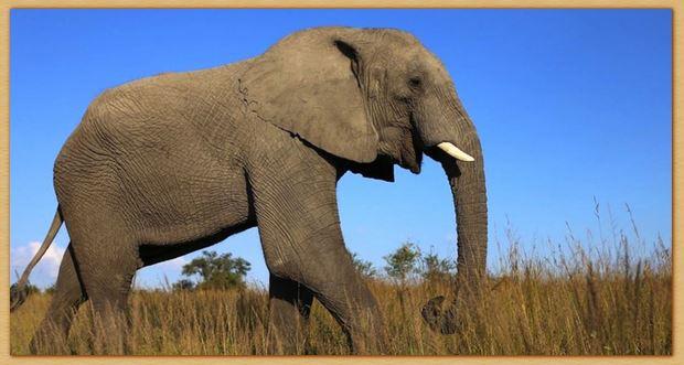 Name:  elephant.JPG Views: 68 Size:  44.0 KB