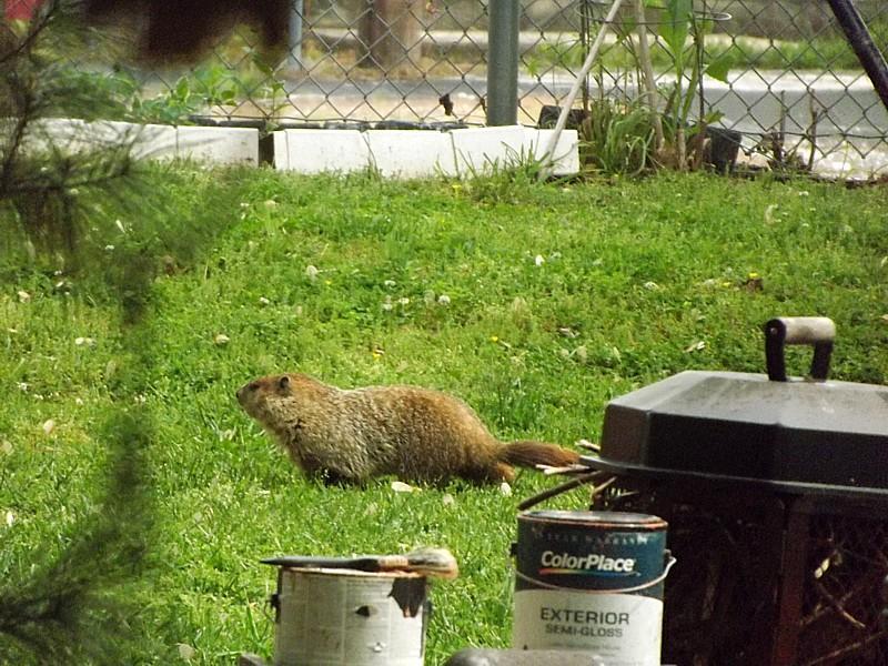 Name:  Groundhog3.jpg Views: 155 Size:  117.7 KB