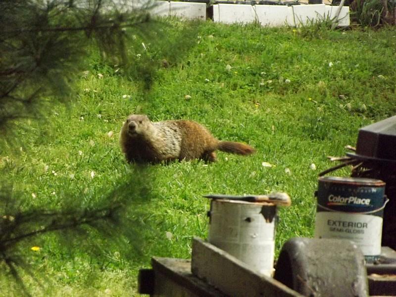 Name:  Groundhog4.jpg Views: 137 Size:  98.6 KB