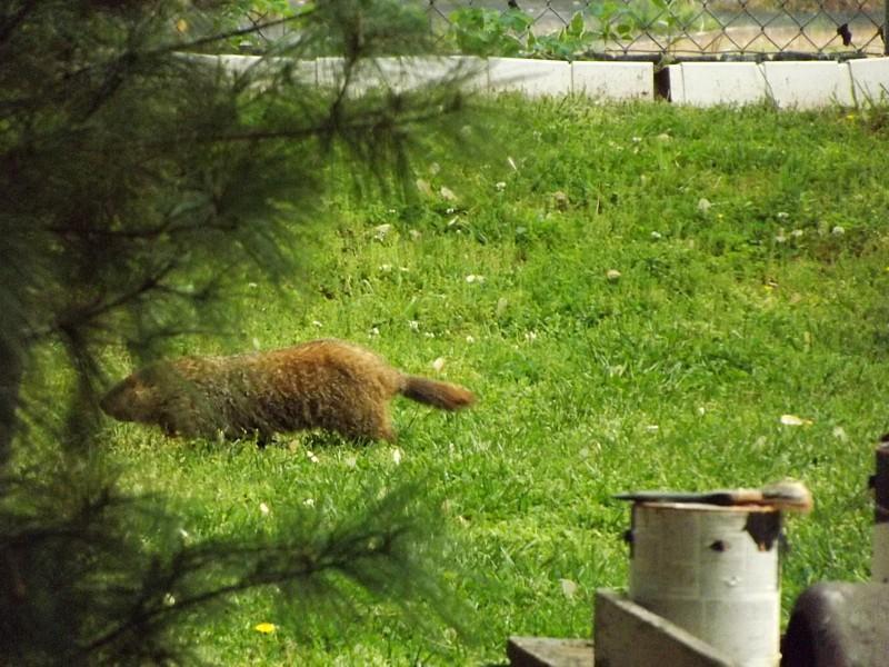 Name:  Groundhog5.jpg Views: 152 Size:  96.4 KB