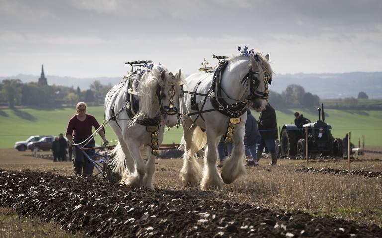 Name:  Ploughing.jpg Views: 163 Size:  57.3 KB