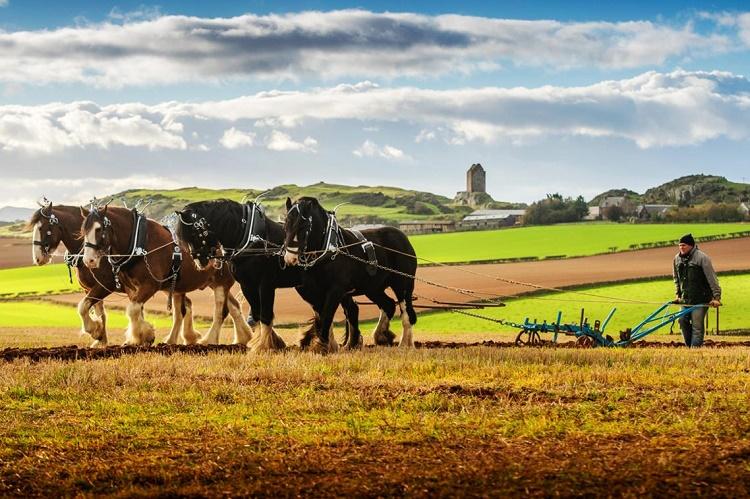 Name:  Ploughing a lone furrow.jpg Views: 134 Size:  188.8 KB