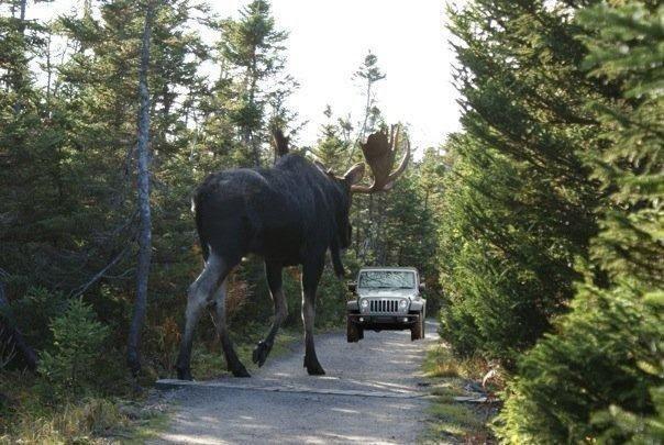 Name:  big moose.jpg Views: 131 Size:  76.4 KB