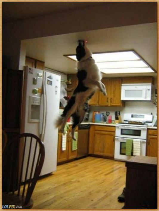 Name:  superdog.JPG Views: 204 Size:  52.6 KB