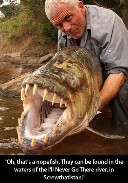 Name:  nopefish.jpg Views: 672 Size:  80.7 KB