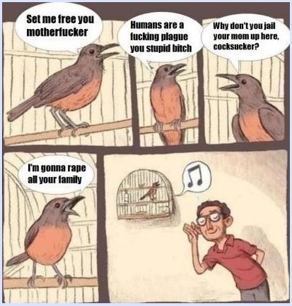Name:  birb.JPG