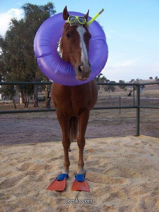 Name:  horse.jpg Views: 101 Size:  81.5 KB