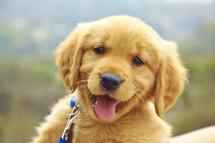 Name:  puppy.jpg Views: 76 Size:  16.5 KB