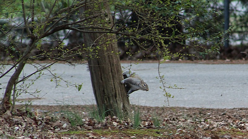 Name:  groundhogsquirrel.jpg Views: 123 Size:  161.9 KB