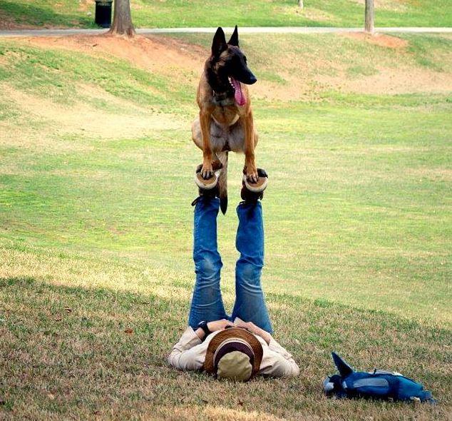 Name:  dog.JPG Views: 122 Size:  108.9 KB