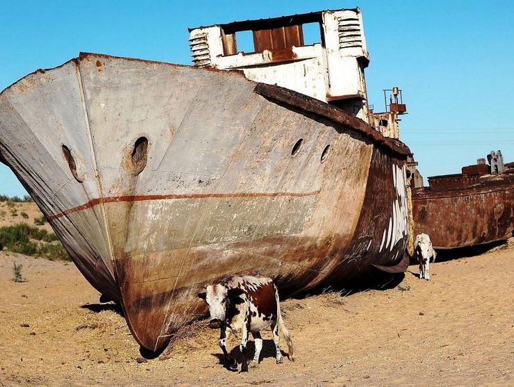 Name:  cowship.JPG Views: 195 Size:  116.9 KB