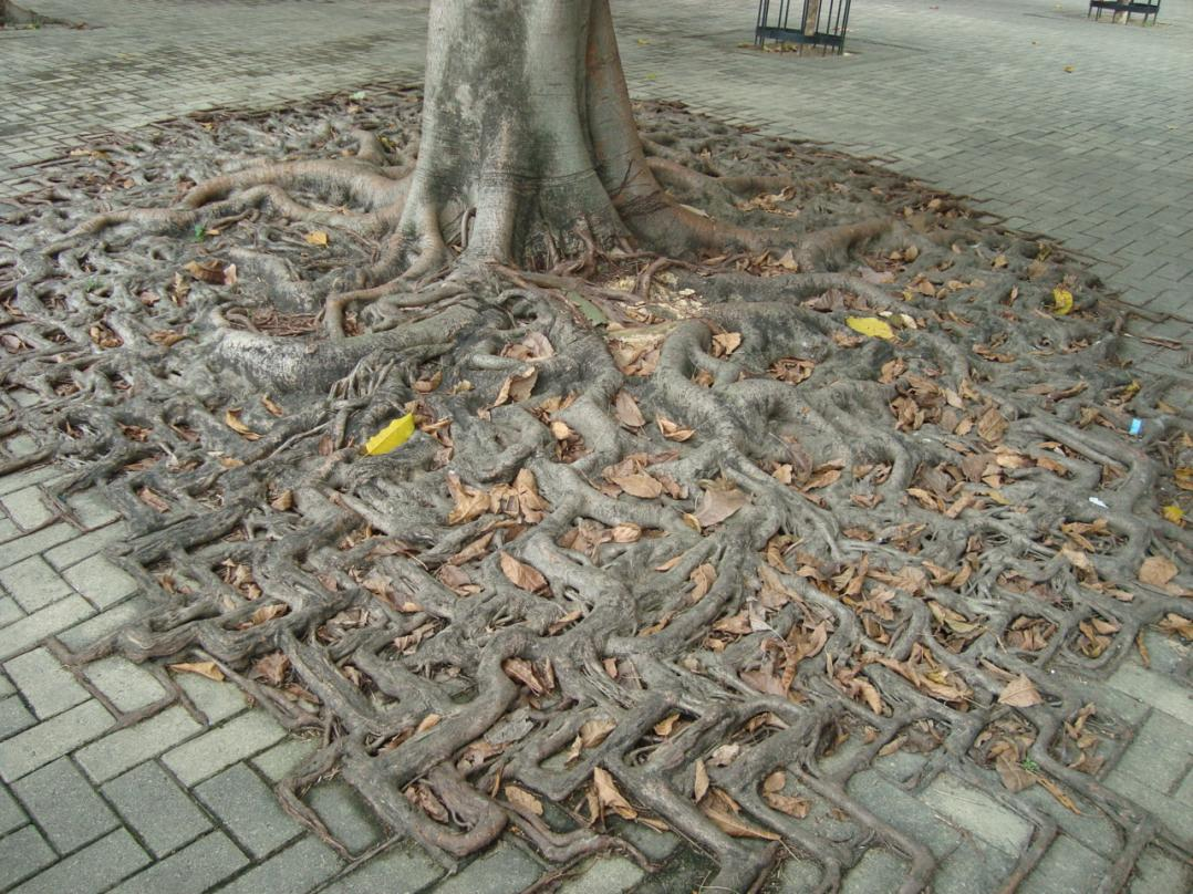 Name:  tree roots.jpg