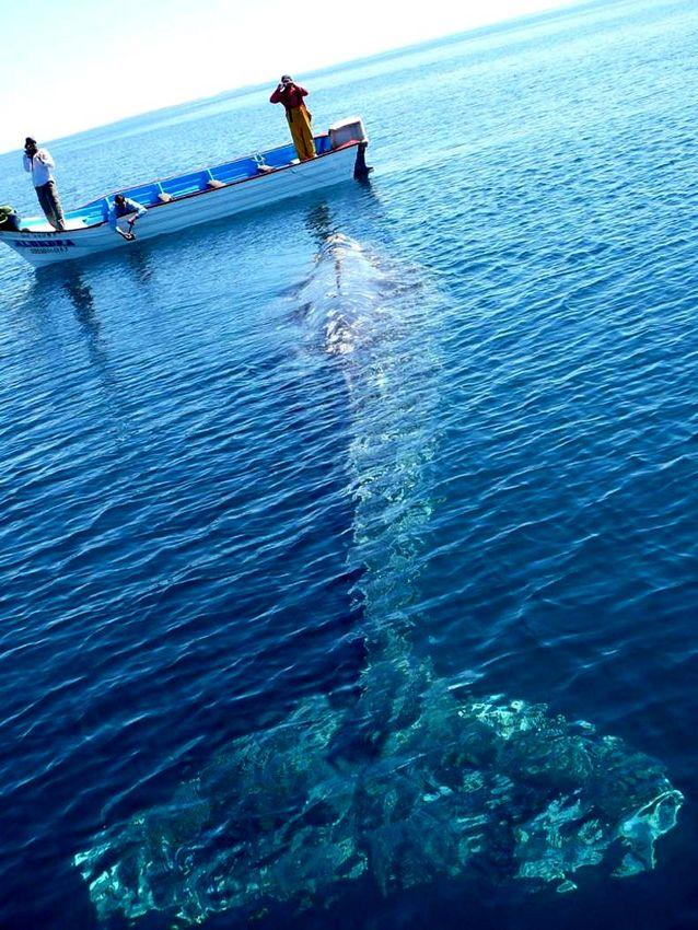 Name:  gonnaneedabiggerboat.jpg Views: 263 Size:  126.6 KB