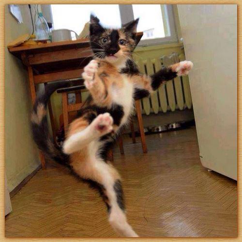 Name:  kitteh.JPG Views: 63 Size:  45.2 KB